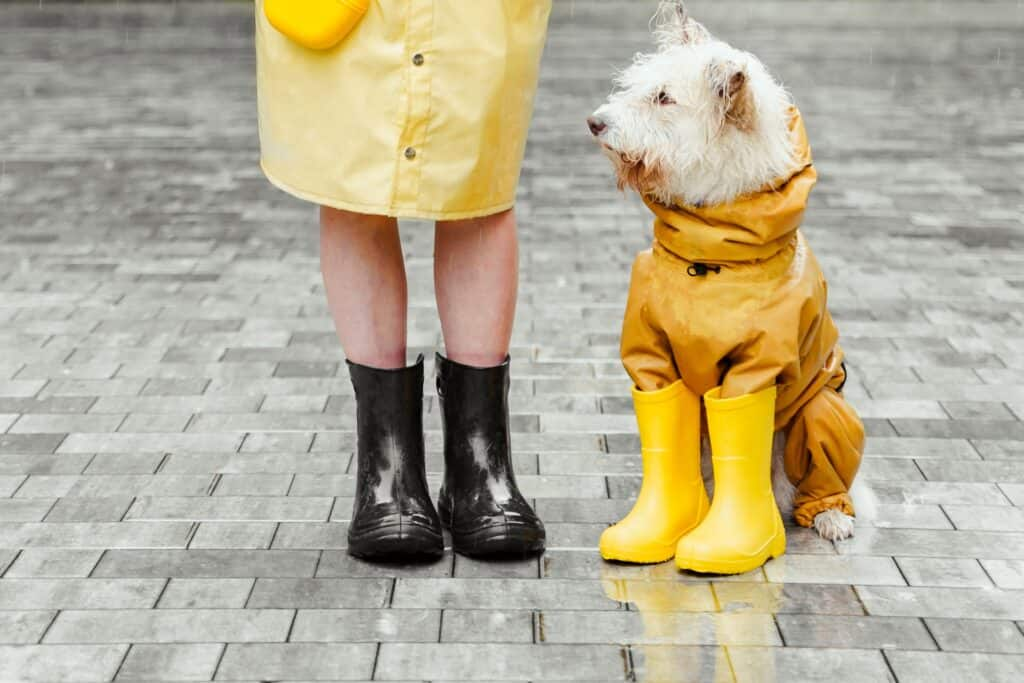 Dog walking can be a great earner for those looking for extra cash.